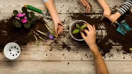 Trois pairs de mains en train de jardiner