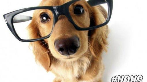 Image - Pet Therapy Program